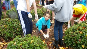 Sixth-grader Shira Funk plants daffodils with her class at Congregation Beth Shalom on Sunday, Nov. 8.