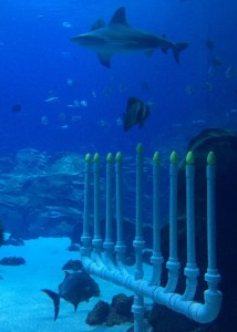 The underwater menorah was lighted every night of Chanukah in the Georgia Aquarium's Ocean Voyager tank last year.