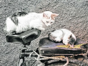 Two cats seem in no hurry for a Moroccan bicycle to go anywhere in the spring.