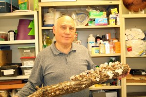 Alan Feingold's lab includes this fungi-covered log his daughter Sharon found.