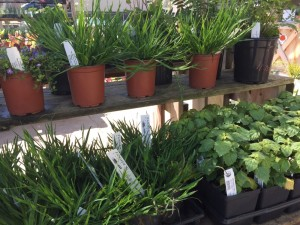 Farmer D Organics offers a selection of plants that are appropriate for the Atlanta climate and soil.