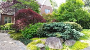Granite stones and Japanese maples form a welcoming entrance to the Ash home.