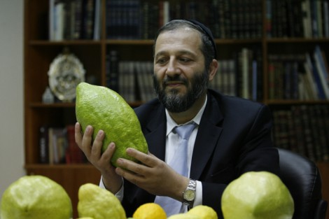 Size does matter. Former Shas chairman Aryeh Deri eyes a huge etrog (photo credit: Michal Fattal/Flash90)