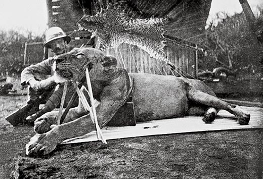 Colonel Patterson with Tsavo Lion (Photo: CC-BY-SA, Wikipedia)