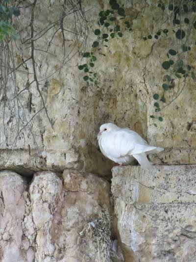 The Dove of Peace. Photo by Sarah Lavi