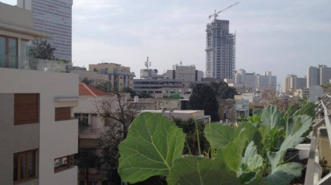 Urban Farming at Mazeh 9, Tel Aviv