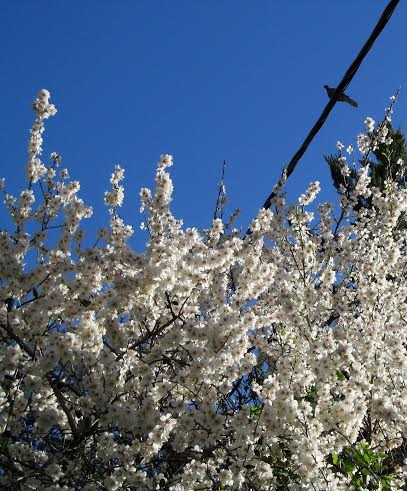 For Spring blossoms... Photo by Leora Leeder