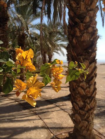Spring in Qumran. Photo by Hannah Rollwage.