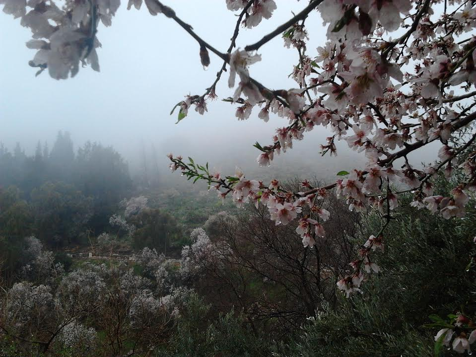 Spring in Rosh Pina  Photo by Yehoshafat Pop
