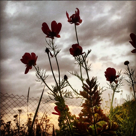 Flowers against a shifting sky.  Photo by Jen Maidenberg