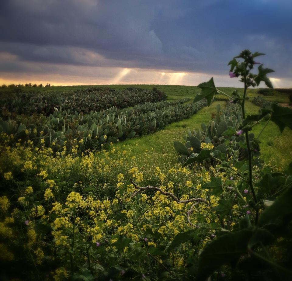 Spring's sullen sky over the fields of Ramot Meir.  Photo by Sarah Tuttle-Singer