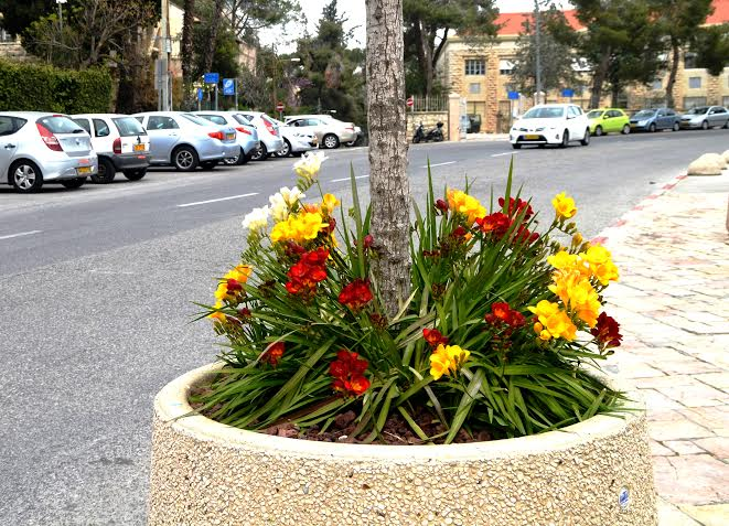 They have new flowers outside Beit Hanasi, the President's House this week. Photo by Sharon Altshul