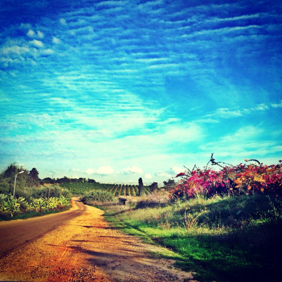 The yellow brick road to Ramle. Photo by Sarah Tuttle-Singer
