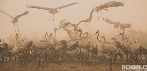 migrating birds during a foggy morning Israel