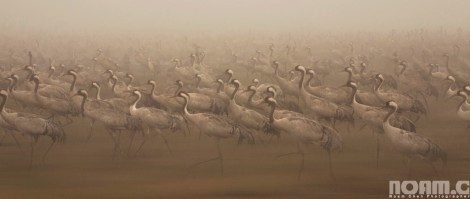 migrating birds at hula lake park Israel
