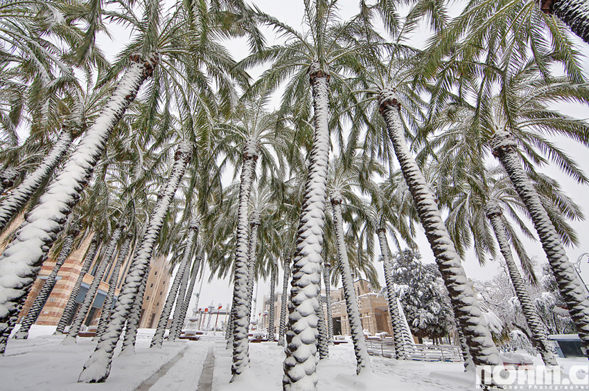 snow-covered-palm-trees