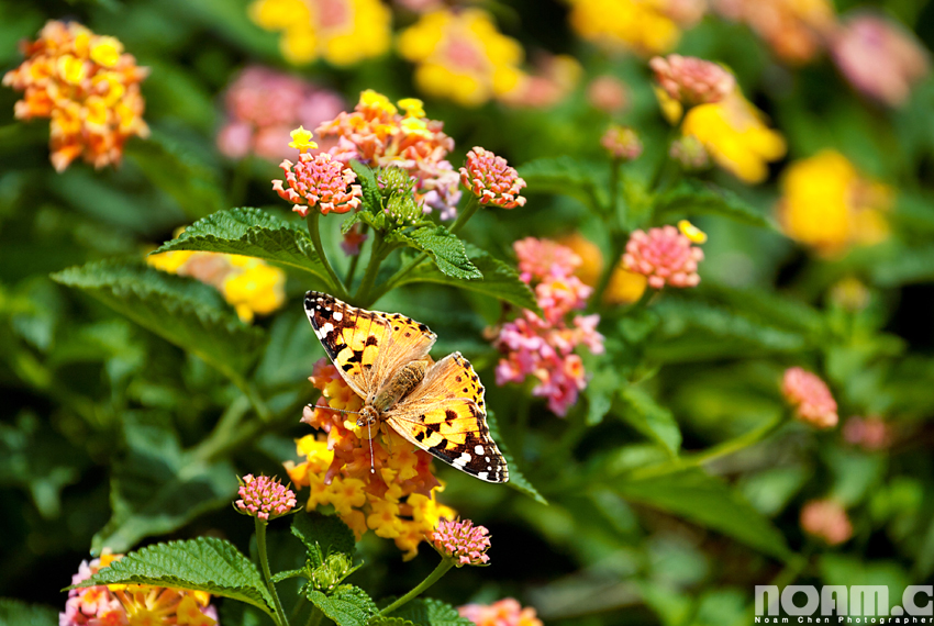 spring-flowers-butterfly