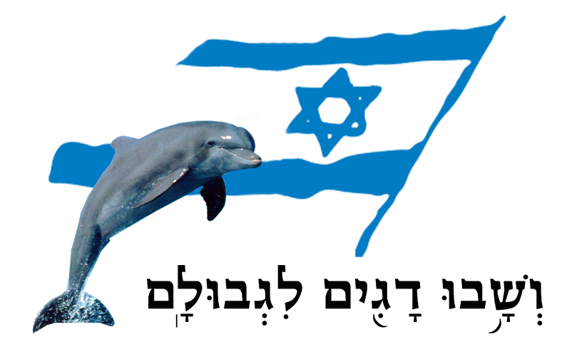 dolphin banner