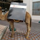 camel-with-solar-panel-photo
