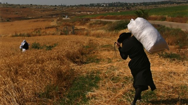 "Beth Haran, West Bank (""Harvesting""), 2009."