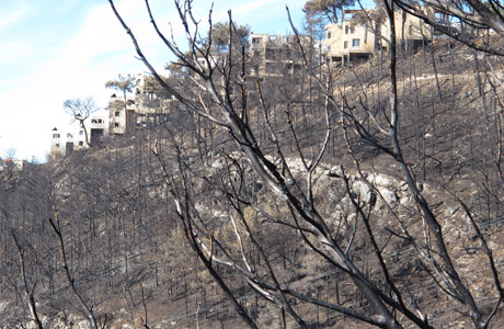 Should nature take its course after devastating fire?