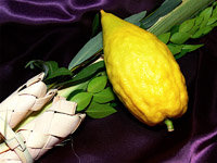 The price of lulav-and-etrog sets could rise this year due to a date palm branch shortage.