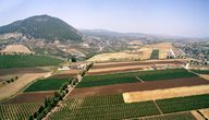 One of Binyamina Winery's vineyards,