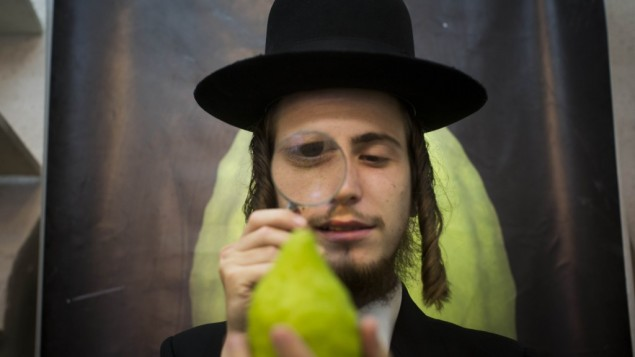 An ultra-Orthodox man examines a citron (etrog) in Jerusalem (photo credit: Yonatan Sindel/Flash90)