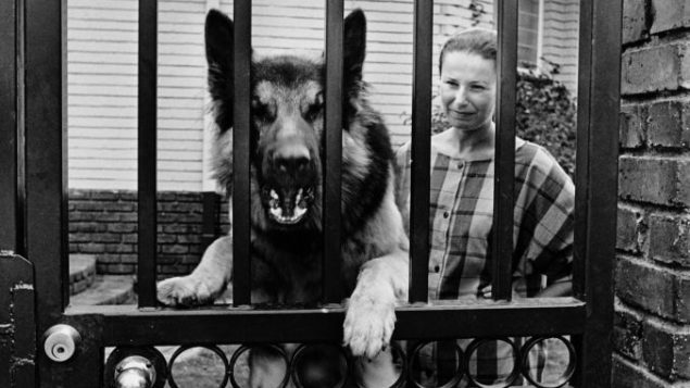 In Gideon Mendel's 1984 photograph, a German shepherd guards the entrance to a Johannesburg suburb.