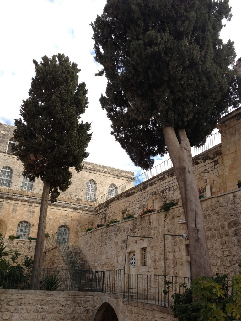 Looking up at the cypresses at the Monastery of the Cross (photo credit: Jessica Steinberg/Times of Israel)