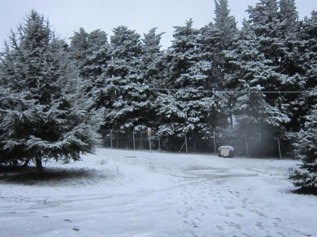 Snow in the Golan Heights on January 9, 2013. (photo courtesy of Naomi Yarm)