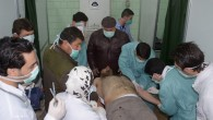 A victim of an alleged chemical attack is treated by doctors in Aleppo, Syria, on Tuesday, March 19, 2013. (photo credit: AP/SANA)