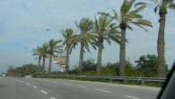 Palm trees line the road alongside the Ayalon highway from Tel Aviv to Jerusalem. Photo by Adam Dickter