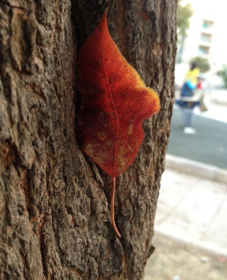 A single red leaf in a Jerusalem playground (photo credit: Jessica Steinberg/Times of Israel)