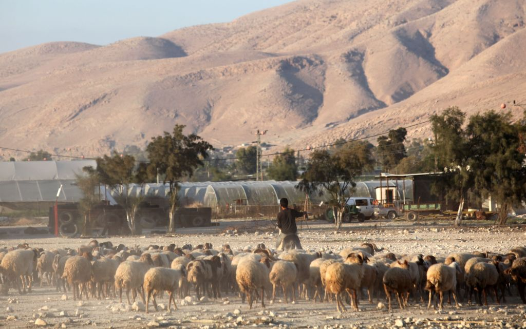 Image result for shepherd israel