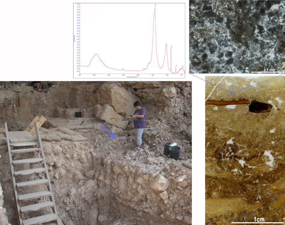 Upper left: Infrared spectrum of the grey sediments, right, showing that the dominant material is calcite, the mineral of which the wood ash is composed. Lower left: Photograph of the cave during excavation; arrow pointing to the hearth. Upper right: micro-morphological image of the grey sediment showing dark grey particles and patches corresponding to the remains of wood ash. Lower right: Scan of a micro-morphological, thin section showing the layered burnt bones (yellow, brown and black fragments), intermixed with grey sediments. (Courtesy: Weizmann Institute)