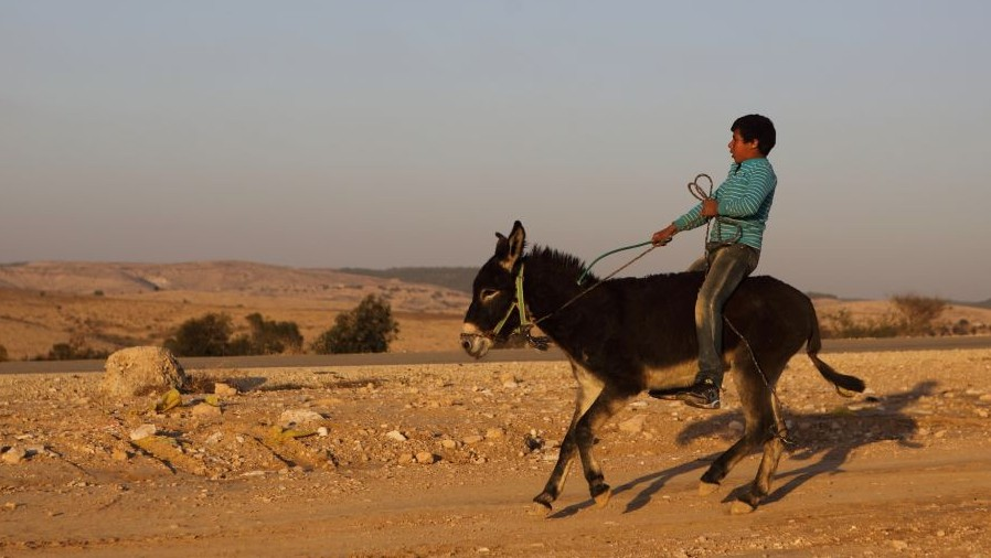 A Bedouin boy rides a donkey in the vill