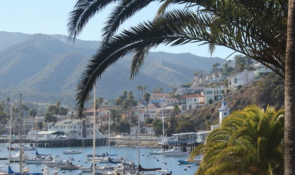 Palm trees frame the harbor in Avalon, on Catalina Island.  George Medovoy