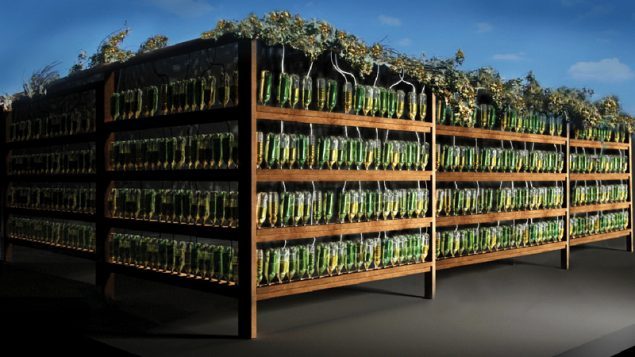 A rendering of Ein Shemer Ecological Sukkah, to be constructed as part of a new exhibit at the JCC.