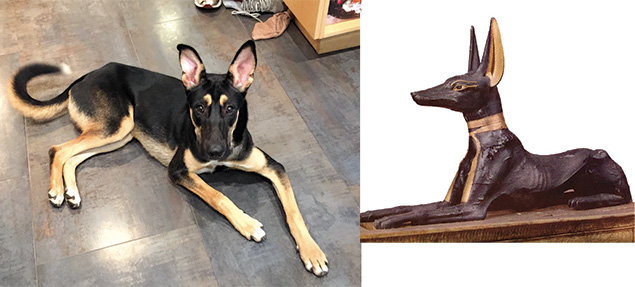 Major bears a striking resemblance to the Egyptian god Anubis.