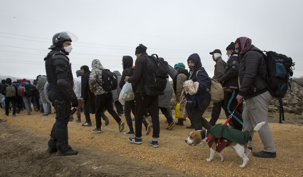 Mohamad Zaki from Baghdad, Iraq, walks his dog Ivo as he walks with a group of migrants after crossing from Croatia, in Rigonce, Slovenia, Sunday, Oct. 25, 2015. (AP Photo/Darko Bandic)