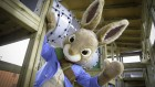 Peter Rabbit big