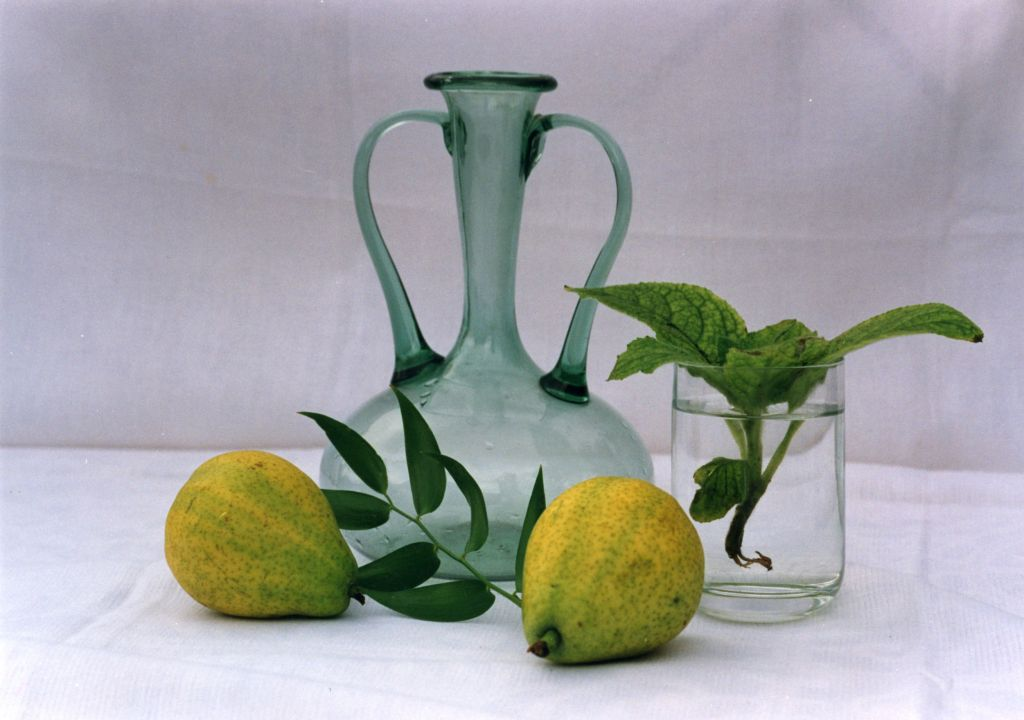 Still Life, Hampstead, London 1990s (Dorothy Bohm)