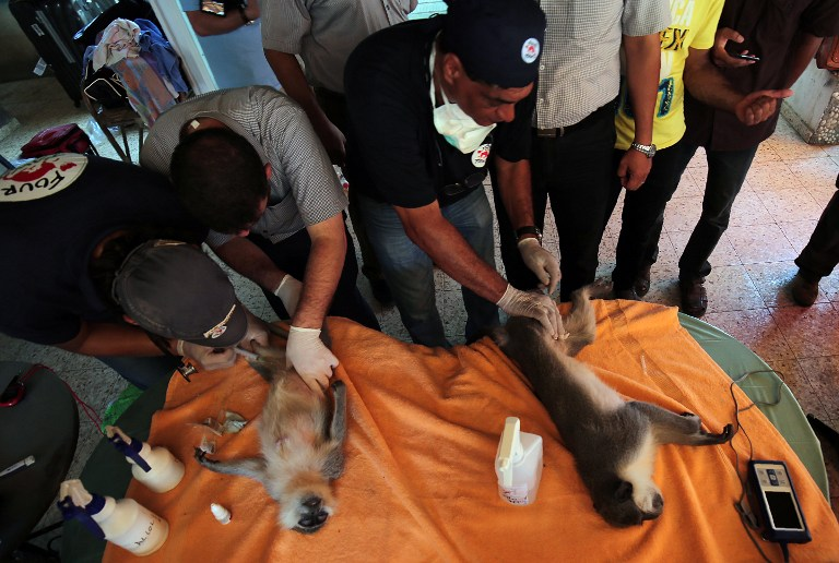 Animal charity removes 15 animals it rescued from Gaza zoo