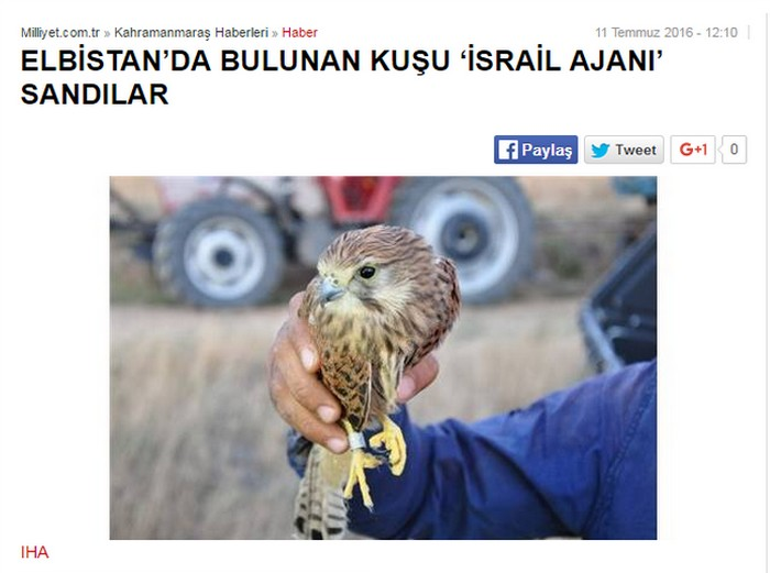 A Turkish newspaper article from July 2016 reporting on the capture of a suspected avian spy for Israel. (screen capture)