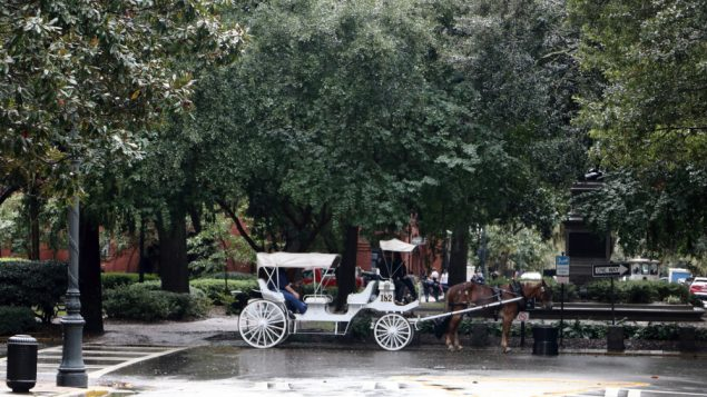 tr-savannah-carriage