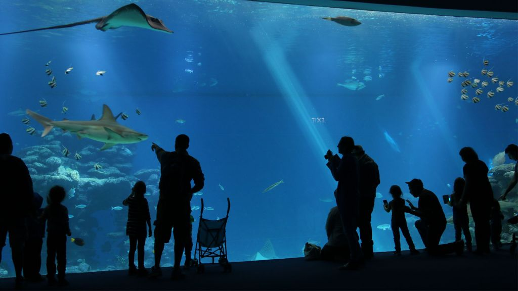 Visitors at Shark World, part of Eilat's Underwater Observatory. (Shmuel Bar-Am)