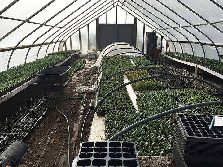 Many vegetables are started in a greenhouse and then moved outside.