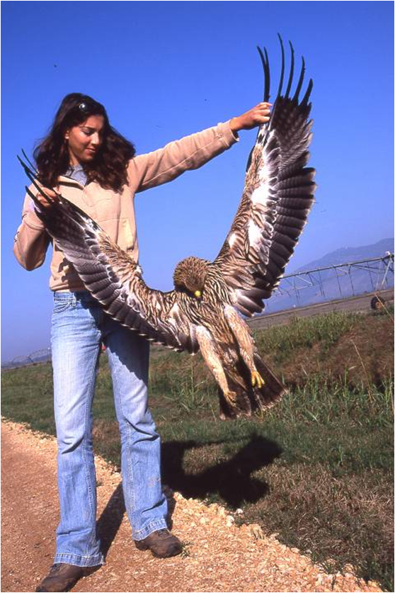 A dead imperial eagle