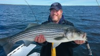 Jeff Ingber holds a freshly caught Narragansett Bay striped bass.